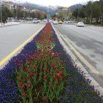 Mevsimlik Çiçek Dikimi